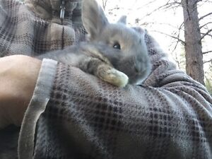 Rabbit - another cute bunny