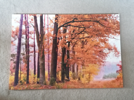 Large woodland canvas print picture