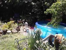 Lush Jungle / Green Escape in the City Brunswick Moreland Area Preview