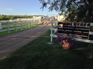Horse Training Spots Available