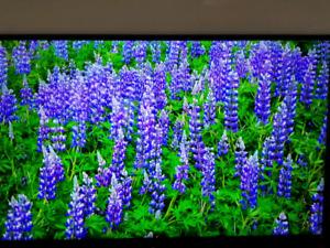 55 inch Sony bravia smart television