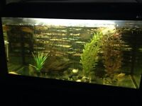 30g freshwater fish tank, stand, fish, & all assessories