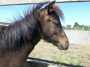 Yearling mini cross looking for wonderful new home!