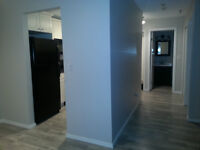 Newly Renovated 1 Bedroom Condo in Renfrew