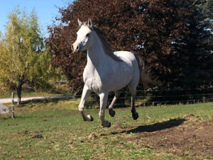 Horses boarded/ Riding Lessons