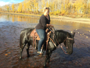 4yr old mare forsale