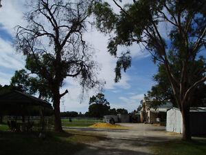 FULL     BOARD AGISTMENT MARIGINIUP Mariginiup Wanneroo Area Preview