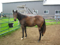 QH. for sale