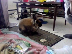 8 Month old bunny