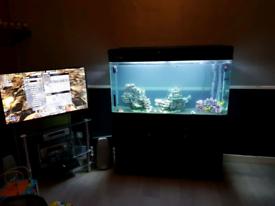 Fish tank / Big aquarium £400.00