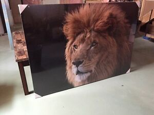 Regal Lion Canvas Art