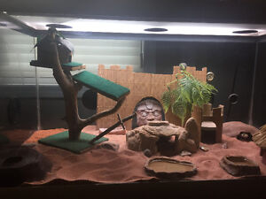 Leopard Geckos and Cage for Sale