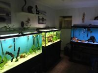 Aquariums and Fish for sale