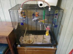Free Budgies & Cage
