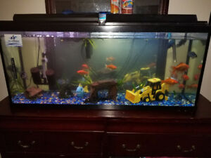 "Selling 8 larger goldfish 2"" - 5"" + $5 each"
