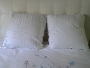 Euro pillows