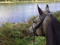 Recherche bon cheval à monter