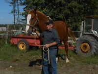 SATURDAY, OCTOBER 10  Horse,Tack & Equip. CONSIGNMENT AUCTION
