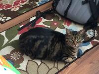 Lost cat in the Nelson Area-Reward $500