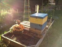 Contract Bee Keeping-Bees, Honey, Beekeeping Equipment
