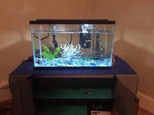 20gal fish tank includes EVERYTHING