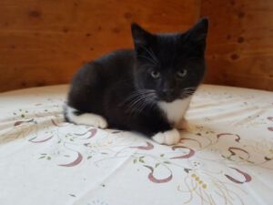 *REDUCED* Kittens to be rehomed