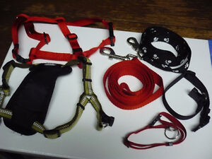Collars, leashes, harnesses