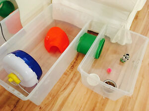 Grande variété d'accessoires pour hérisson ou petits animaux!