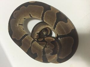 Further reduced - Snakes and things.