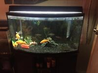 For sale 46 gallon bowfront tank and stand