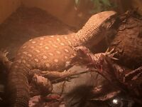Bosc Monitor with Full 7ft Setup