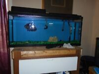 One or both 55 US Gallons Fish Tanks with Canister filtration