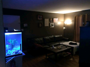 Looking for a room in highfield !