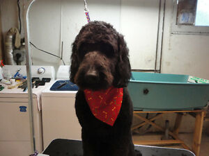 My Pet's Spot grooming and Pet Care London Ontario image 3