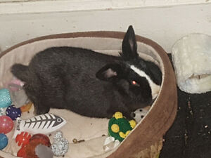 Rabbit to rehome asap