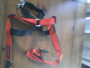 Halti Harness for large breed