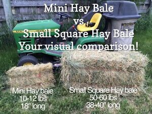Mini Hay bales for Sale