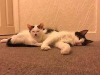 Cat & kitten for sale