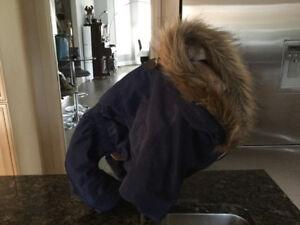 Manteau hiver de chien  à vendre