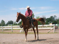 TRAIL RIDES - RIDING LESSONS - BOARDING