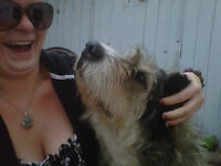 House/ Pet Sitter Available for the Red Deer Area