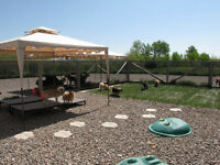 Cage Free Doggy Daycare and Boarding