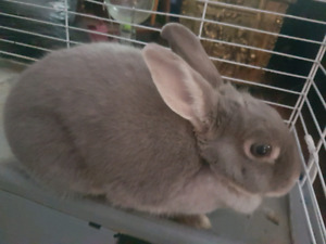 Rabbit and 4' Large cage