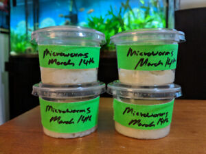Microworm Starter Cultures for Sale