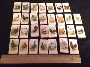 1911 ITC C54 Fowls, Pigeons & Dogs Tobacco Cards Complete Set of