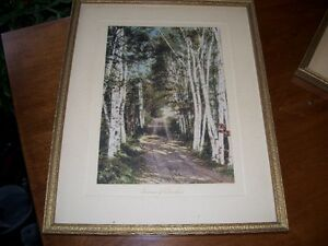 Old I W Stevens Campbellton NB Photo Avenue of Birches