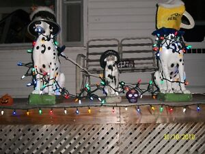 Dalmation Dogs for sale