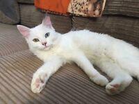 Missing cat!!!!