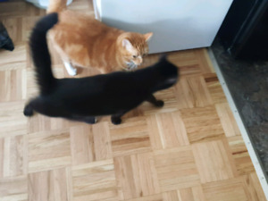 Cats to be rehomed