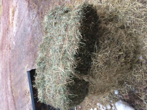 Square bales of second cut grass hay for sale